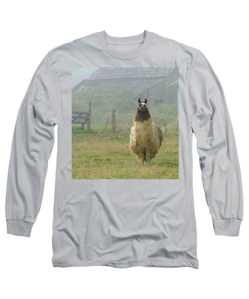 Coast Llama Long Sleeve T-Shirt