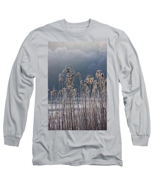 Frozen Reeds At The Shore Of A Lake Long Sleeve T-Shirt