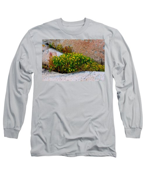Growing In The Cracks Long Sleeve T-Shirt by Brent L Ander