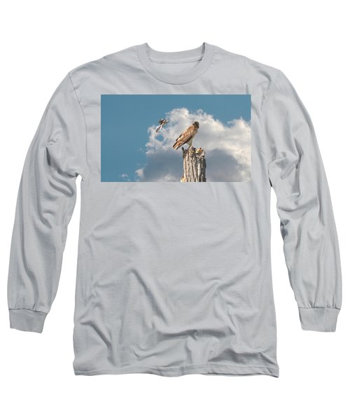 Red-tailed Hawk And Mockingbird Dispute Long Sleeve T-Shirt