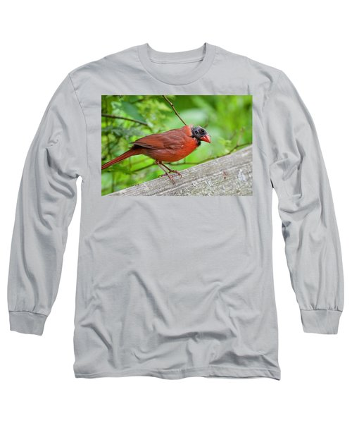 Bald Northern Cardinal Long Sleeve T-Shirt