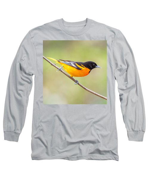 Baltimore Oriole Long Sleeve T-Shirt by Paul Freidlund