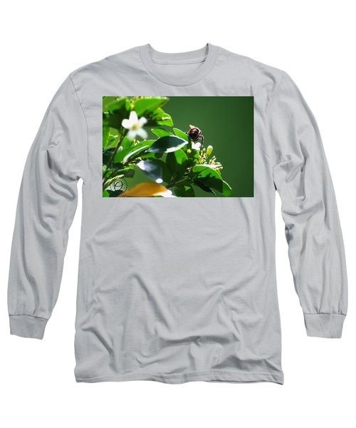 Bee On Jasmine Long Sleeve T-Shirt by Shelley Overton