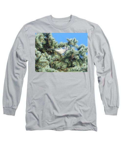 Long Sleeve T-Shirt featuring the photograph Blue Jay Colorado Spruce by Rockin Docks Deluxephotos