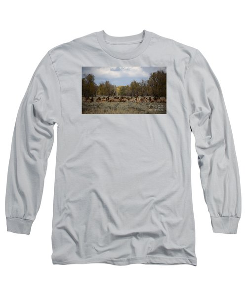 Bull Elk And Harem Long Sleeve T-Shirt