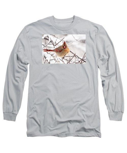 Long Sleeve T-Shirt featuring the photograph Cardinal Beauty by Trina Ansel