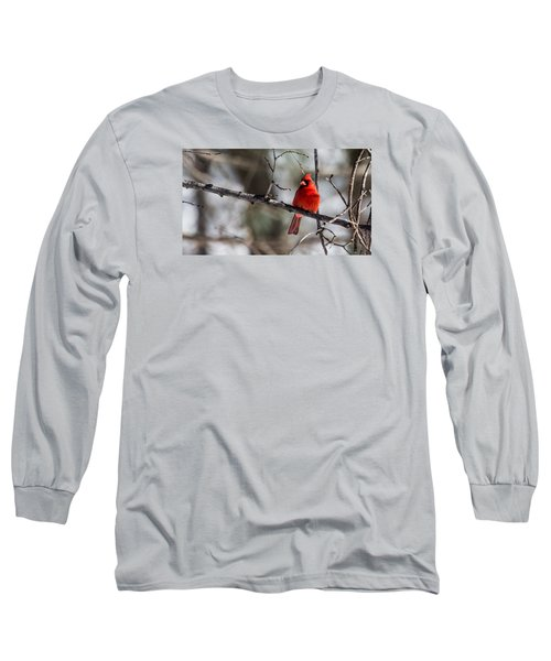 Cardinal Long Sleeve T-Shirt by Dan Traun