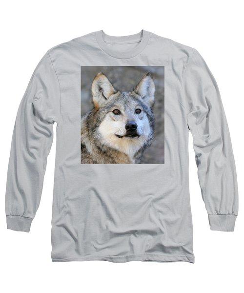 Curious Wolf Long Sleeve T-Shirt by Elaine Malott