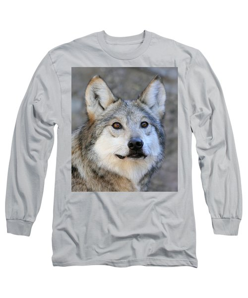 Curious Wolf Long Sleeve T-Shirt