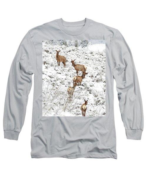 Elk Cows In Snow Long Sleeve T-Shirt