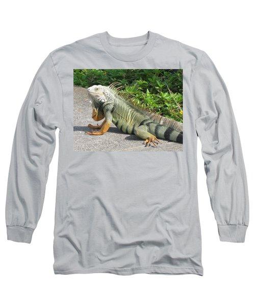 Long Sleeve T-Shirt featuring the photograph Iguania Sunbathing by Christiane Schulze Art And Photography