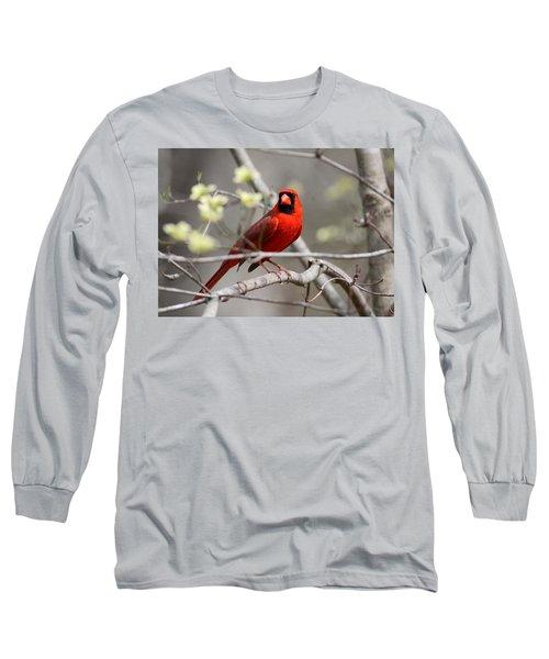 Img_2027-004 - Northern Cardinal Long Sleeve T-Shirt
