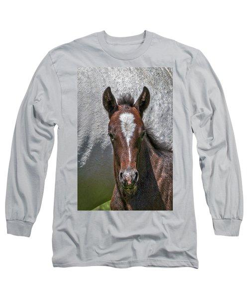 Long Sleeve T-Shirt featuring the photograph Lipizzan Horses #2 by Stuart Litoff