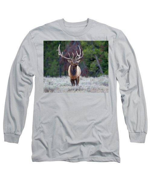 Majestic Bull Elk Long Sleeve T-Shirt by Jack Bell
