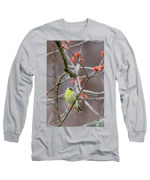 Long Sleeve T-Shirt featuring the photograph Molting Gold Finch by Bill Wakeley