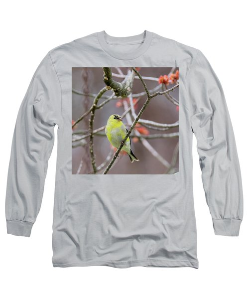 Long Sleeve T-Shirt featuring the photograph Molting Gold Finch Square by Bill Wakeley
