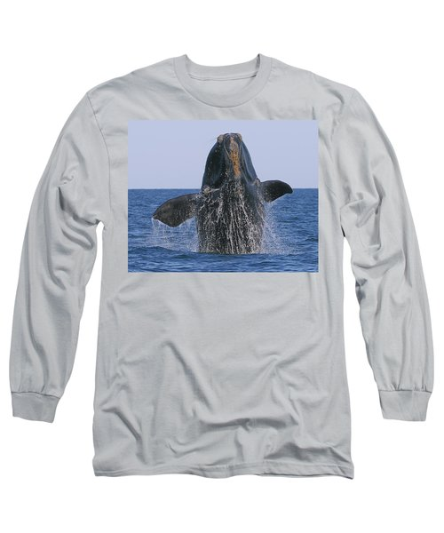 North Atlantic Right Whale Breaching Long Sleeve T-Shirt