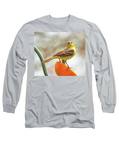 Long Sleeve T-Shirt featuring the photograph Orchard Oriole by Debbie Stahre
