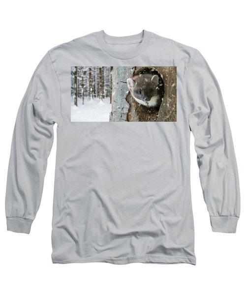 Pine Marten In Tree In Winter Long Sleeve T-Shirt
