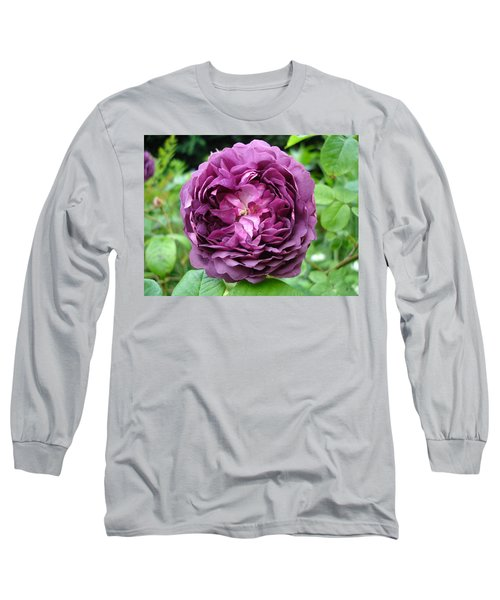 Purple English Rose Long Sleeve T-Shirt