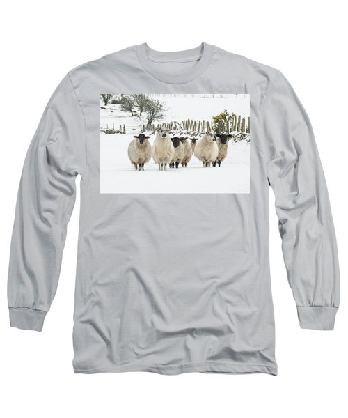 Sheep In Snow Long Sleeve T-Shirt