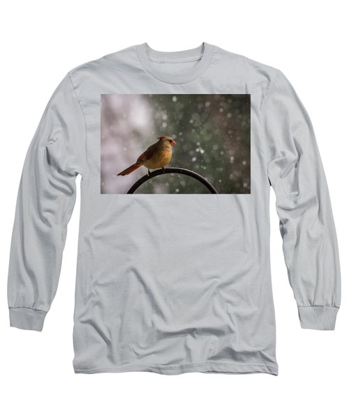 Long Sleeve T-Shirt featuring the photograph Snow Showers Female Northern Cardinal by Terry DeLuco