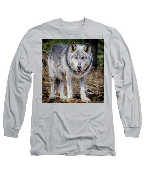 Long Sleeve T-Shirt featuring the photograph The Great Gray Wolf by Teri Virbickis