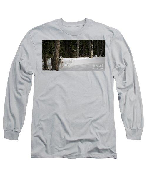 White Wolf Long Sleeve T-Shirt by Brad Allen Fine Art