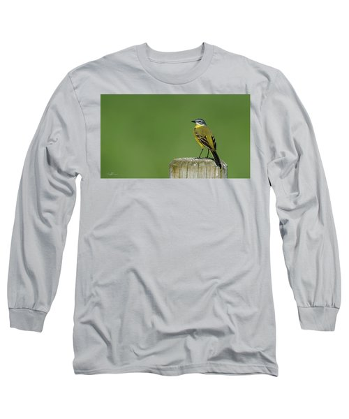 Yellow Wagtail Perching On The Roundpole Long Sleeve T-Shirt