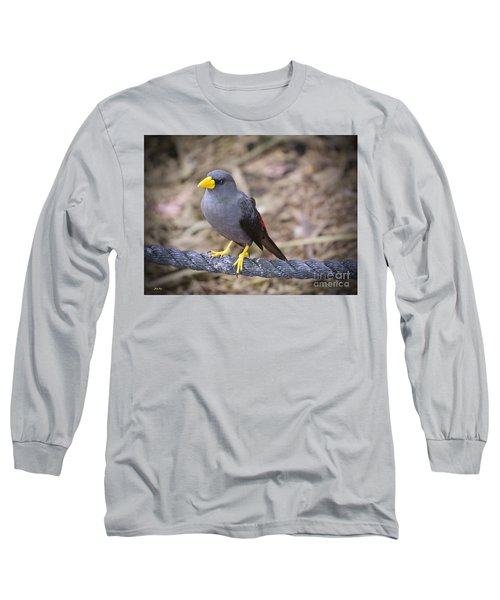 Young Myna Long Sleeve T-Shirt by Judy Kay