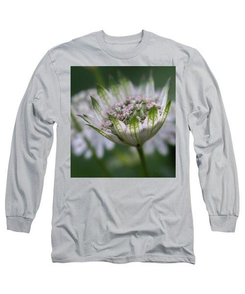 Astrantia Long Sleeve T-Shirt