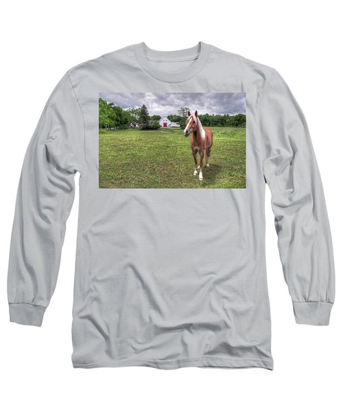 Long Sleeve T-Shirt featuring the photograph Horse In Pasture by Wayne Marshall Chase