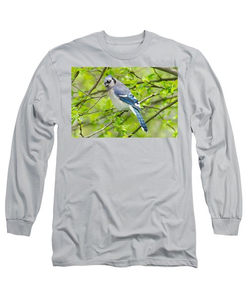 Springtime Bluejay Long Sleeve T-Shirt