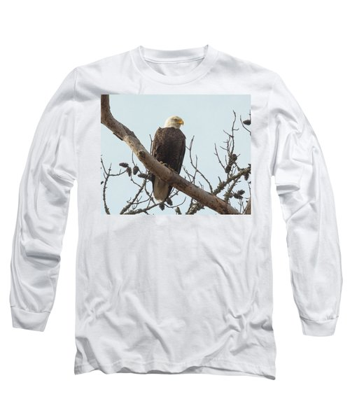 Resting Bald Eagle Long Sleeve T-Shirt
