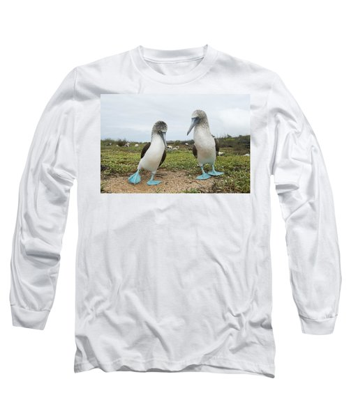 Blue-footed Booby Pair Courting Long Sleeve T-Shirt by Tui De Roy
