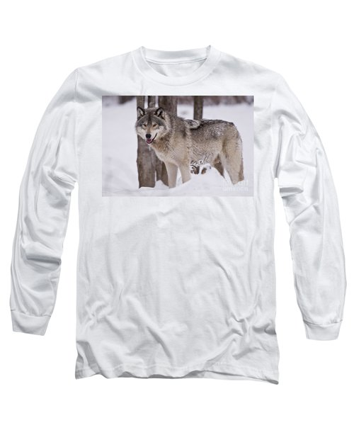 Timber Wolf In Winter Long Sleeve T-Shirt