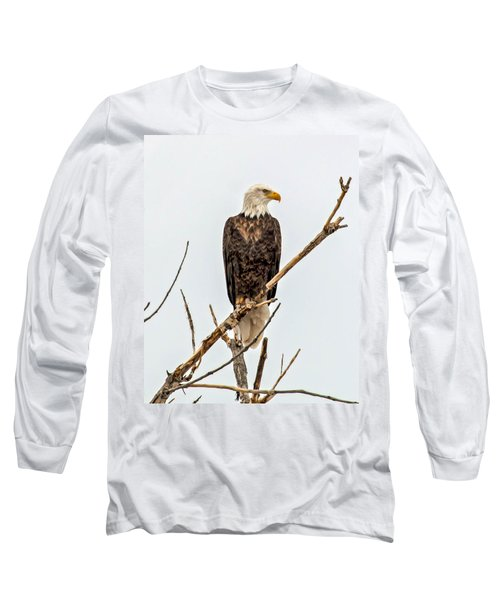 Bald Eagle On A Branch Long Sleeve T-Shirt