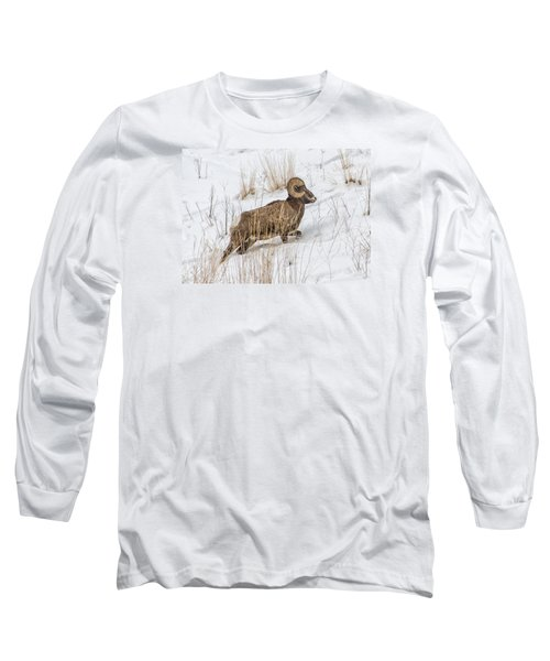 Bighorn In Yellowstone Long Sleeve T-Shirt by Alan Toepfer