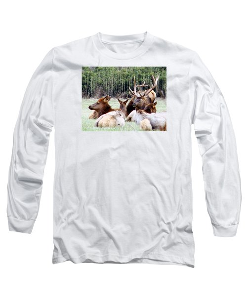 Bull Elk And His Girls 2 Long Sleeve T-Shirt