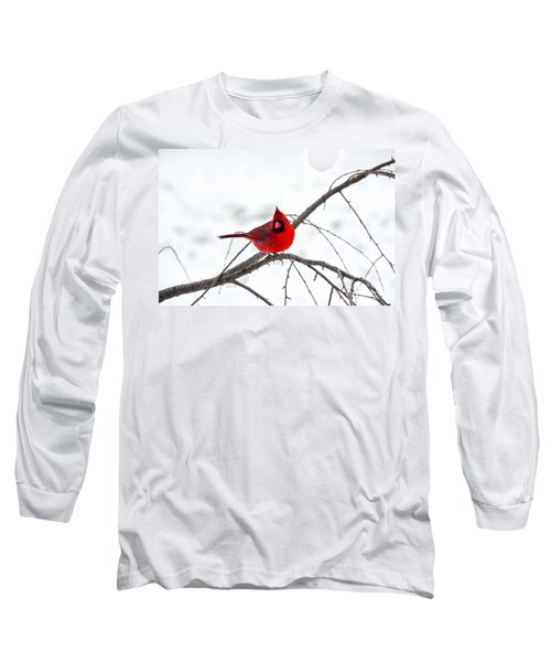 Cardinal On A Branch  Long Sleeve T-Shirt