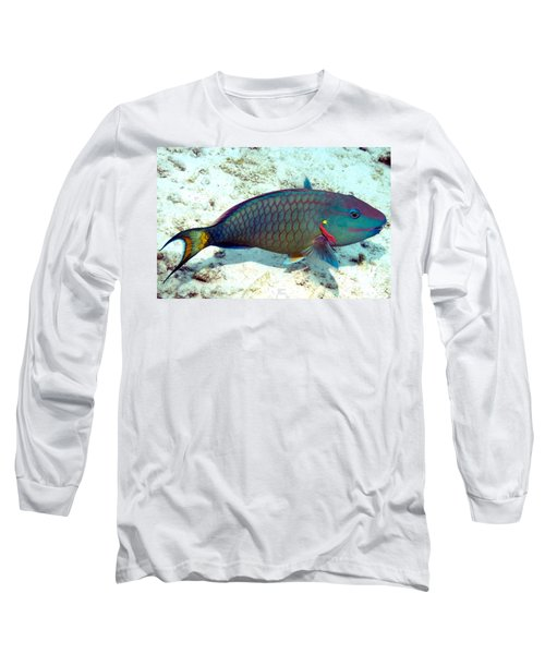 Caribbean Stoplight Parrot Fish In Rainbow Colors Long Sleeve T-Shirt by Amy McDaniel