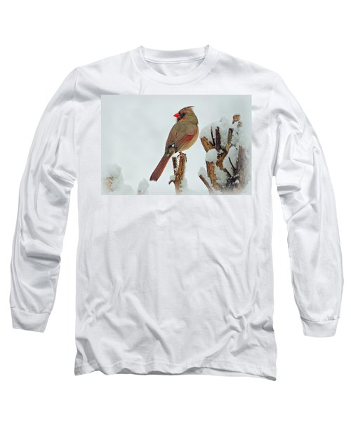 Female Cardinal In The Snow Long Sleeve T-Shirt