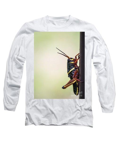 Giant Eastern Lubber Grasshopper Long Sleeve T-Shirt by Edward Fielding