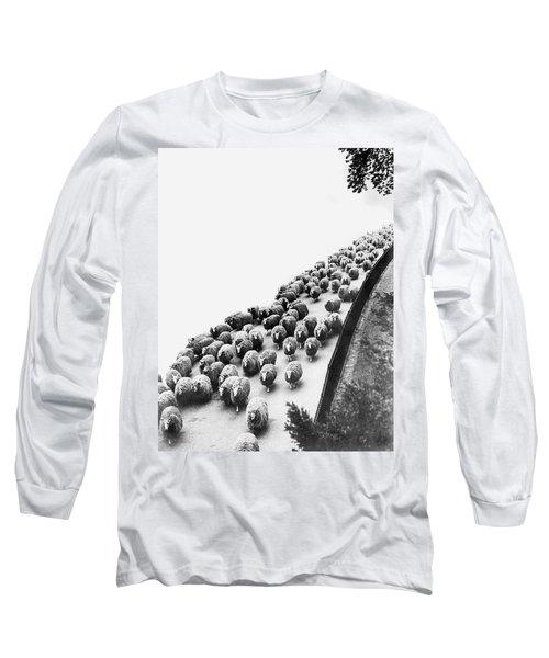 Hyde Park Sheep Flock Long Sleeve T-Shirt
