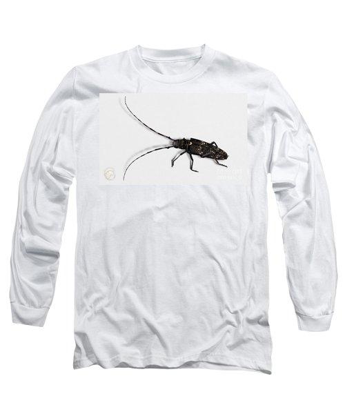 Long-hornded Wood Boring Beetle Monochamus Sartor - Coleoptere Monochame Tailleur - Long Sleeve T-Shirt