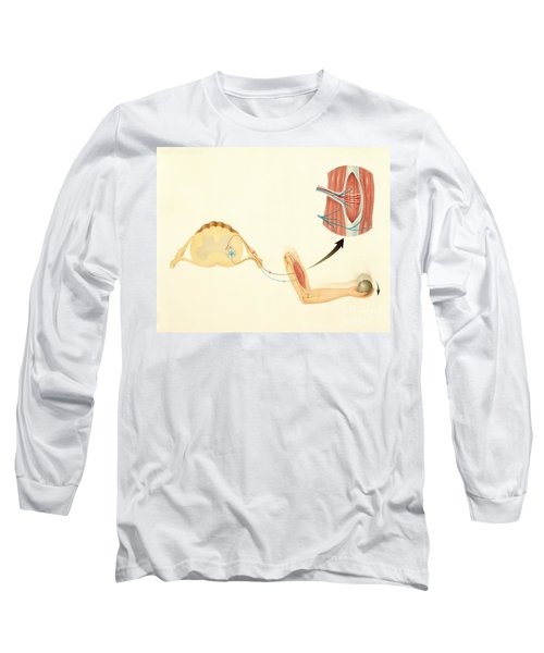 Motor Nerves And Stretch Reflex Long Sleeve T-Shirt