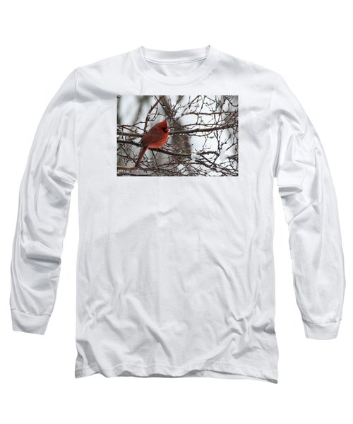 Northern Red Cardinal In Winter Long Sleeve T-Shirt