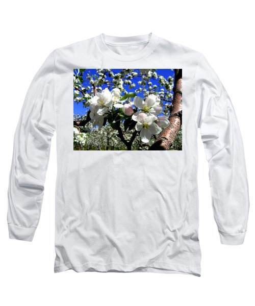Orchard Ovation Long Sleeve T-Shirt by Will Borden