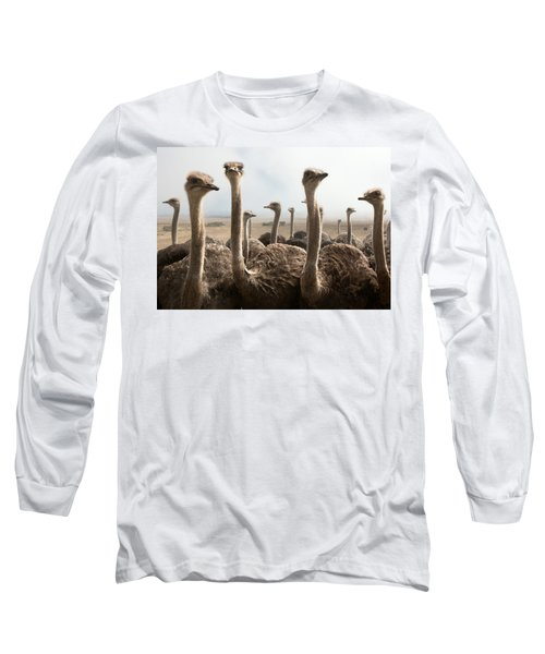 Ostrich Heads Long Sleeve T-Shirt by Johan Swanepoel