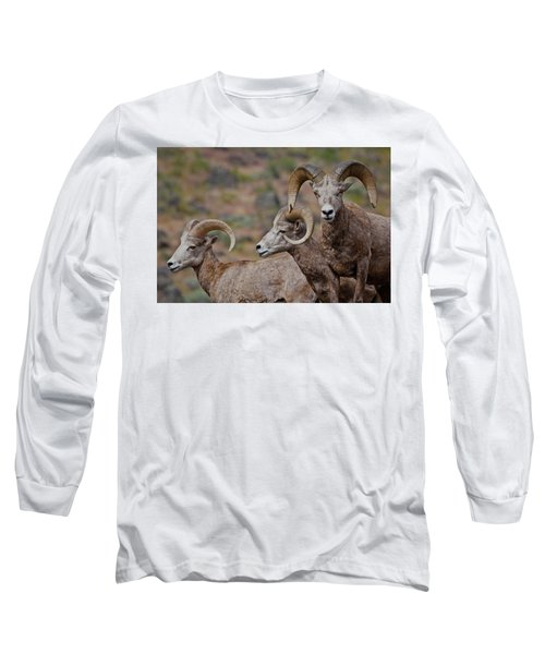 Rams In Three Long Sleeve T-Shirt
